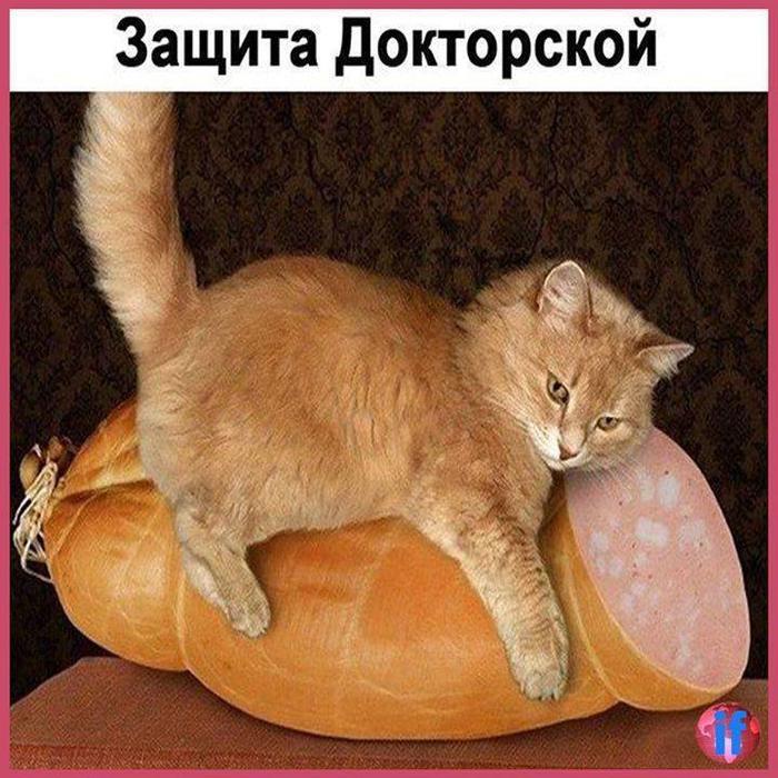 https://img0.liveinternet.ru/images/attach/d/0/143/828/143828190_41665299_278749899407622_8765236439555244032_n.jpg