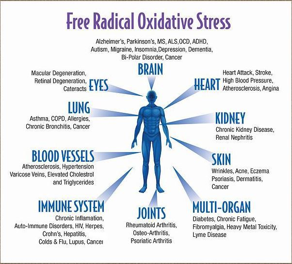free_radical_oxidative_stress (602x545, 211Kb)