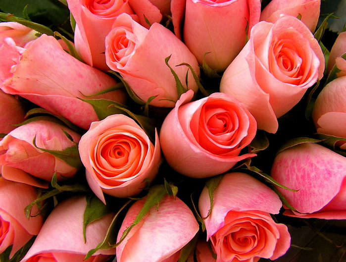 Pink_Sweetheart_Roses_by_muffet1 (150x79, 488Kb)