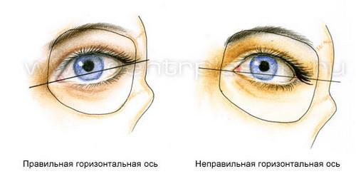3720816_Anatomiya_verhnih_i_nijnih_vek13 (500x251, 19Kb)