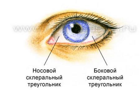 3720816_Anatomiya_verhnih_i_nijnih_vek15 (450x305, 19Kb)