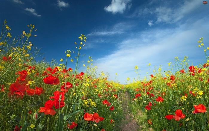 Картинки по Ðапросу летние поля