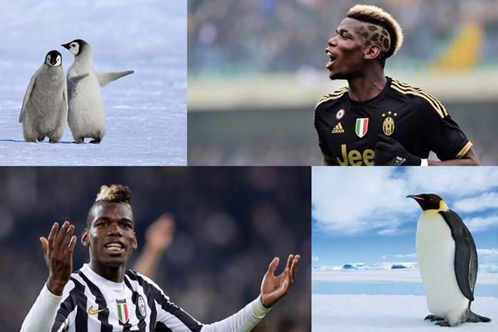 Фотографии: Зверский футбол. На каких животных похожи известные футболисты