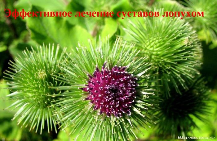 Артрит лечение в красноярском крае
