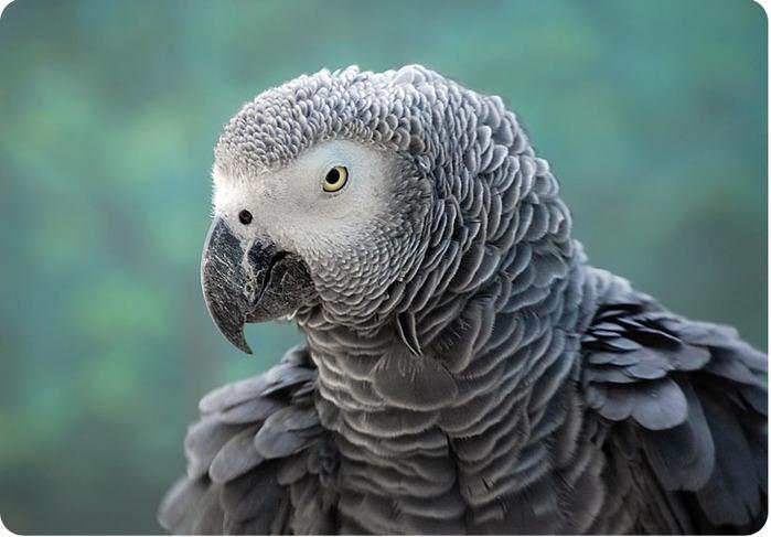 Картинки по запросу умный попугай пьёт