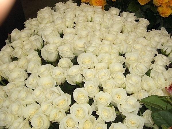 пытаюсь большой букет белых роз с пожеланиями чудо-картинки очень полезны