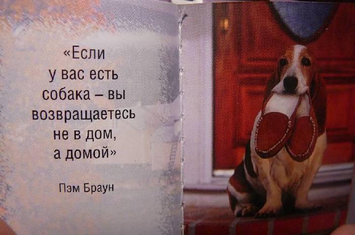 картинки цитаты про собак растет озере, однако