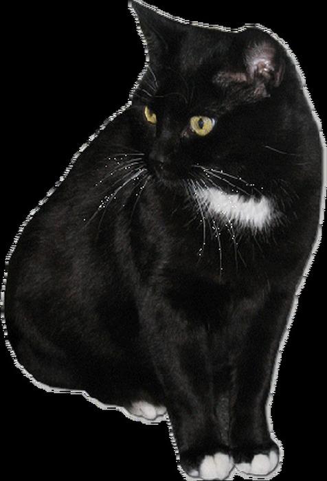 Картинки кошек черных анимация