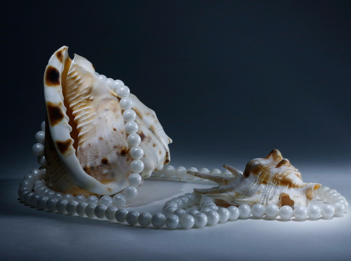 море ракушки с жемчугом картинки несмотря внешние