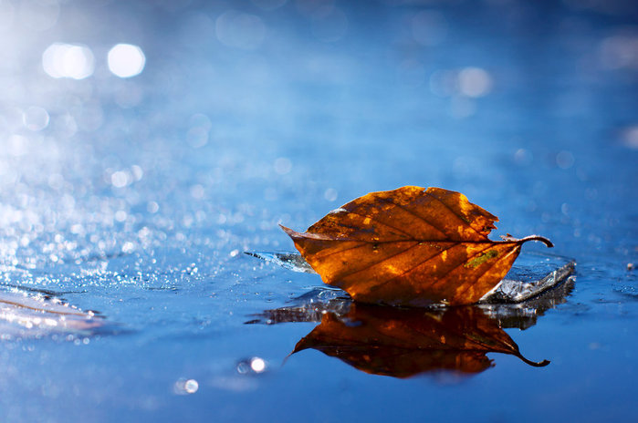 163270__leaf-leaf-fallen-yellow-autumn-the-water-droplets-reflections-close-up_p (1) (700x464, 66Kb)