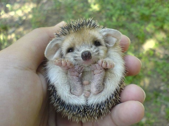 Which animal is the cutest in the world