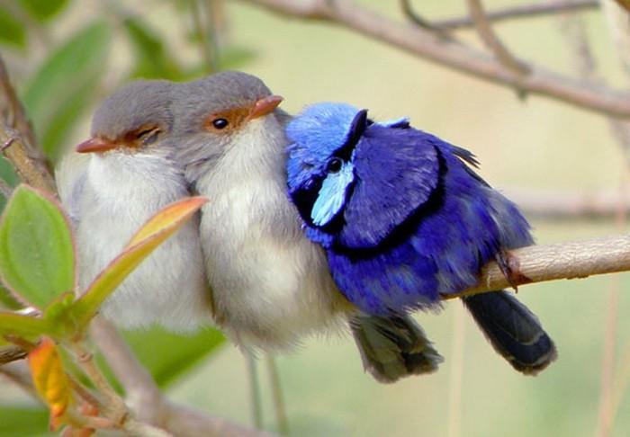Как общаются животные между собой? Самые поразительные способы!