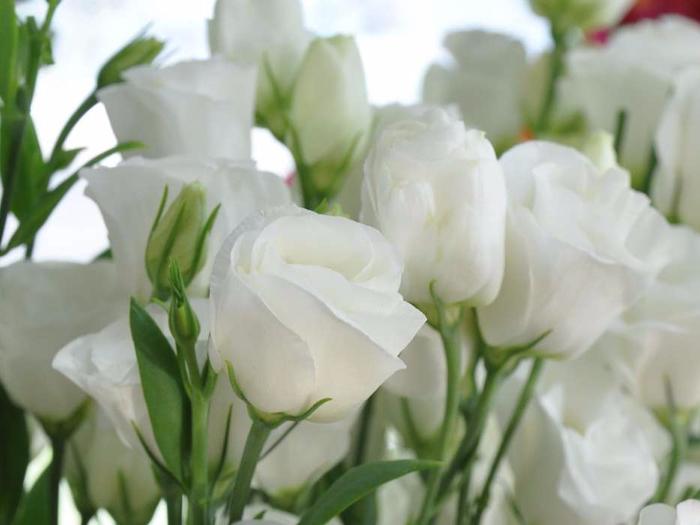 белые цветы - Самое интересное в блогах