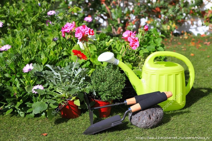 depositphotos_24069639-planting-flowers-with-garden-tools-various-flowers-and-herbs-in (700x466, 356Kb)