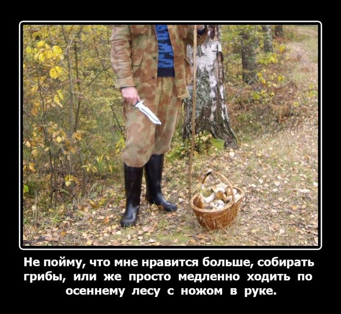 Медведь собирает грибы в лесу демотиватор