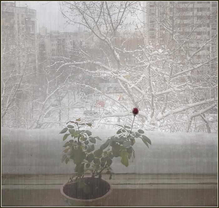 этом фото картинка метель за окном сайдинг как