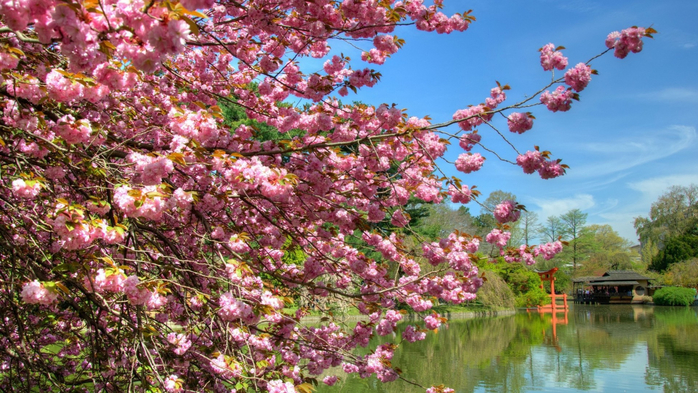 Nature___Seasons___Spring_Lakes_nature_trees_wallpaper_043249_ (700x393, 460Kb)