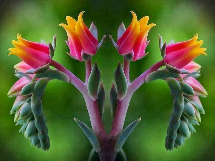 Интересные цветы 171