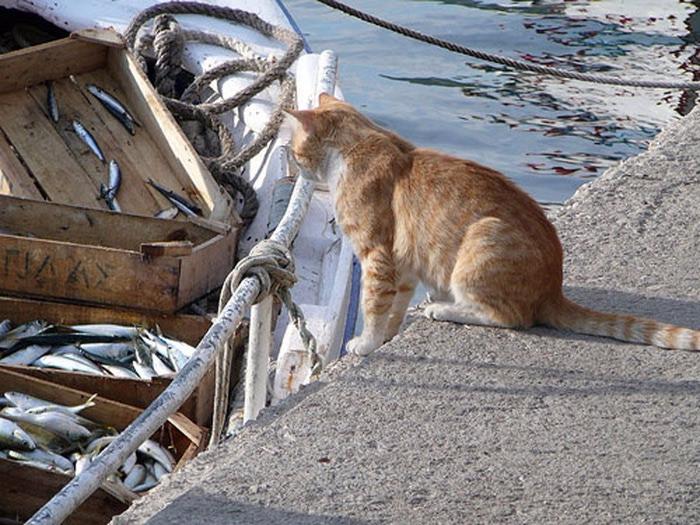 Кого ловят коты