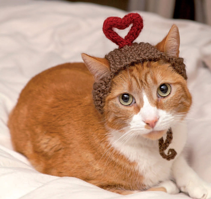 Cats_In_Hats_09 (700x663, 398Kb)