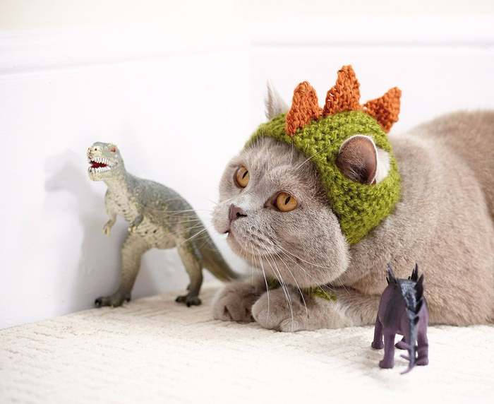Cats_In_Hats_07 (700x572, 314Kb)