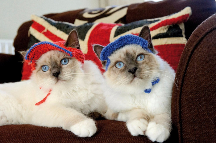 Cats_In_Hats_03 (700x465, 363Kb)