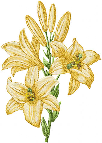 lily-machine-embroidery-design (340x473, 47Kb)