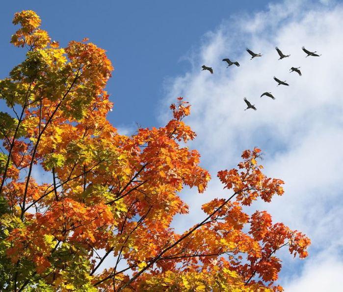 осень картинки птицы