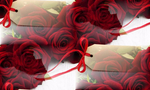Превью red-roses-flowers-rozy-buket-1234 (700x420, 309Kb)