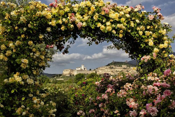 Мой любимый сад хабаровск фото баччан