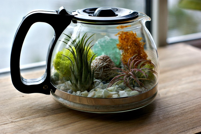 Plants+and+Coffee+--+Let's+make+a+coffee+pot+terrarium (2) (700x465, 316Kb)