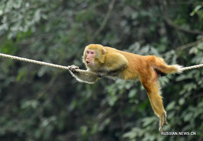 Секс поза обезьянка на дереве