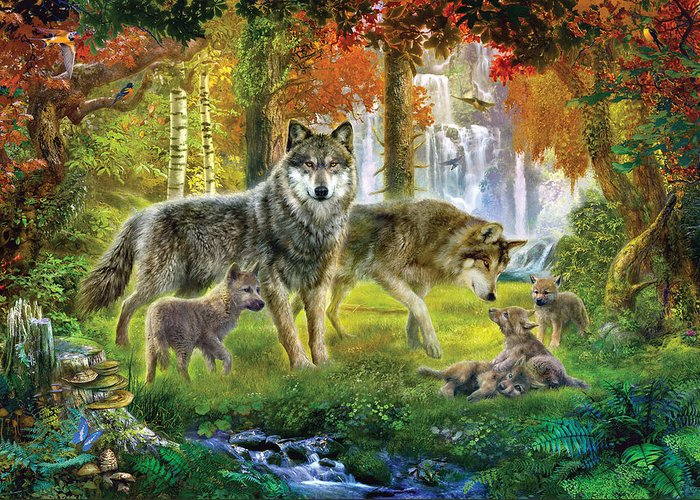 summer-wolf-family-jan-patrik-krasny (700x500, 481Kb)