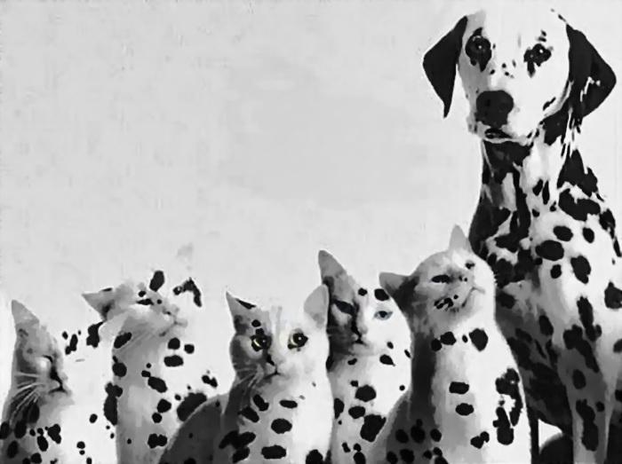 нуждаются поздравления с днем рождения с собаками далматинцами времена