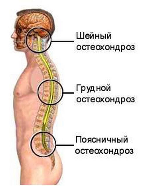 подобрана очень может ли болеть живот от остеохондроза позвоночника поискать
