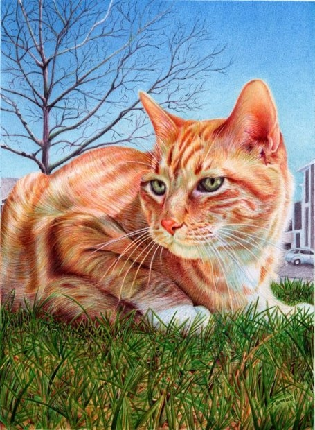 4138752_1346074803_ginger_cat___ballpoint_pen_by_vianaartsd4z3sg3 (455x620, 238Kb)