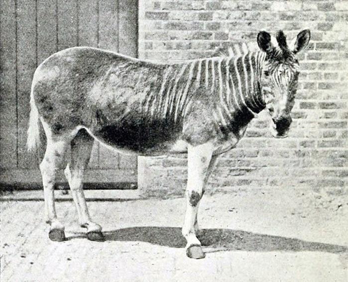 10 вымерших животных, которые имеют шансы на «воскрешение»