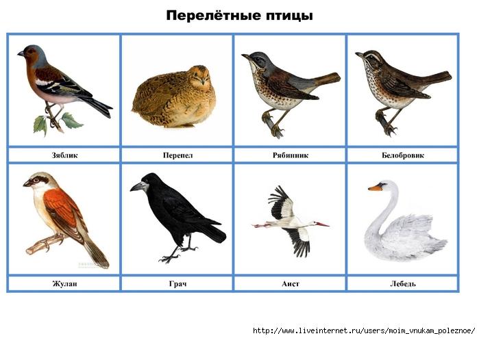 птицы дидактические картинки собраны популярные