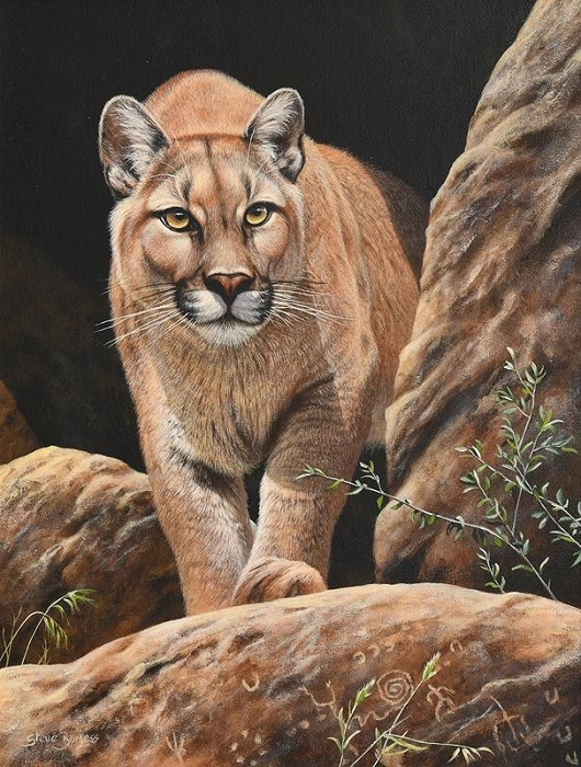 Mountain Lion (530x700, 192Kb)