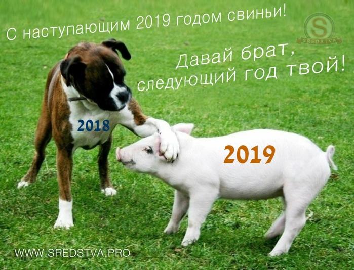 большинстве случаев поздравления от собаки с годом свиньи ему еще над