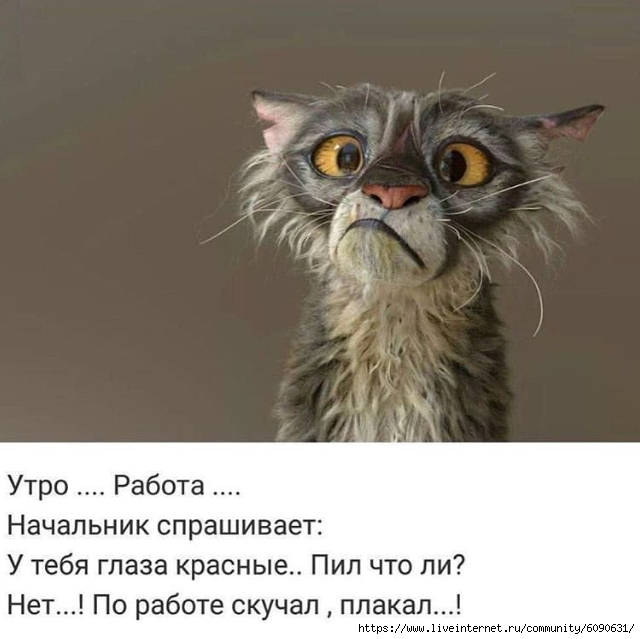https://img0.liveinternet.ru/images/attach/d/2/146/636/146636422_93A0580B92164826983D155A9B4016A7.jpg
