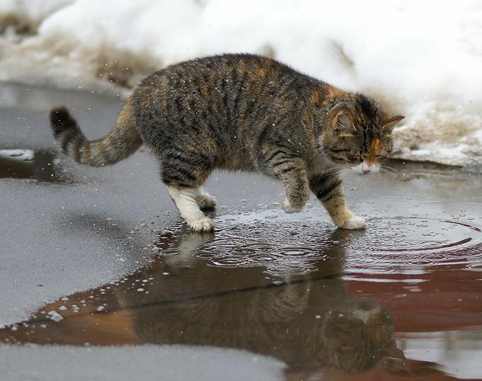 Кот в грязи картинки