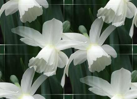 p_spring002 (440x319, 59Kb)