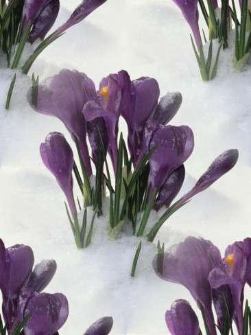 p_spring019 (366x488, 90Kb)