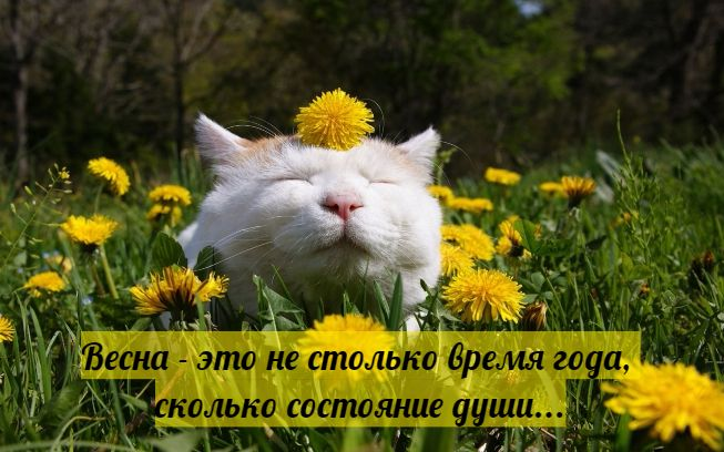 https://img0.liveinternet.ru/images/attach/d/2/147/764/147764618_springpicsfunnyquotes15.jpg