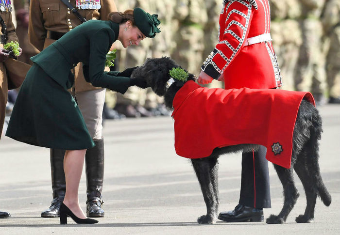 kate-middleton-dog-parade-a (700x485, 70Kb)