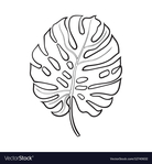 Превью full-leaf-of-monstera-palm-tree-sketch-vector-12740632 (647x700, 127Kb)