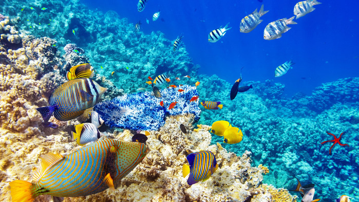 underwater-world-coral-reef-748ФОТО452136 (700x393, 200Kb)