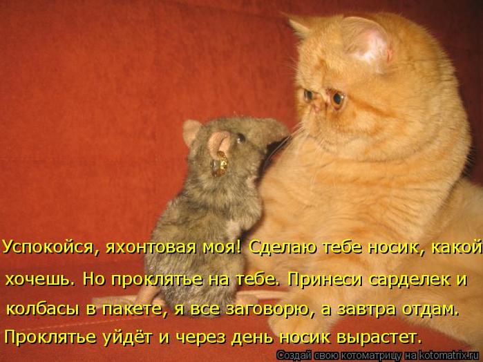 Смешные картинки котов с надписями до слез для поднятия настроения