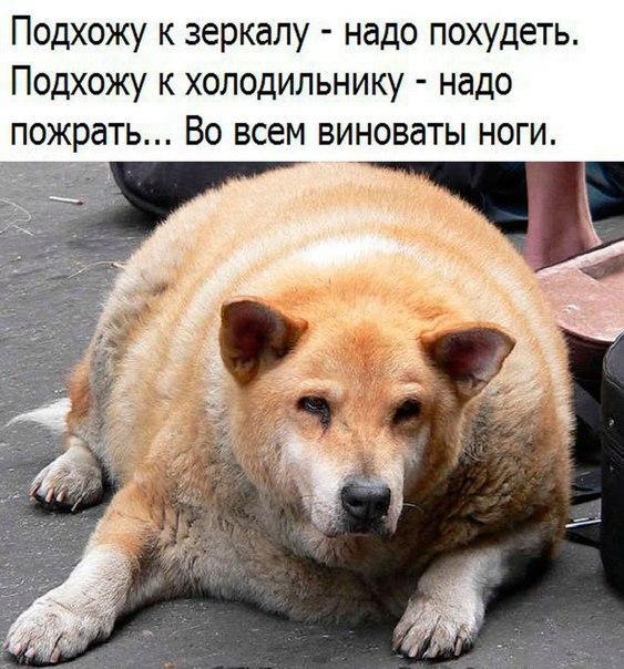 smeshnie_kartinki_153360305461 (563x604, 262Kb)